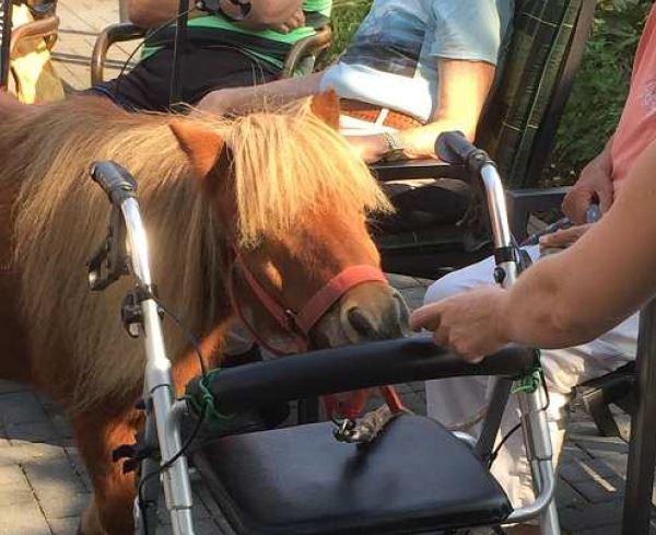 Pferdegestützte Therapie Für Senioren In Der Tagespflege